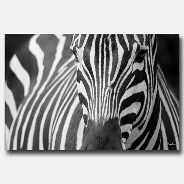 Tableau Decoration Zebre : Tableau design rectangle zèbre décoration
