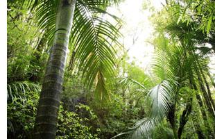 Decoration Thème Jungle Objets De Décoration Exotiques Pour Votre
